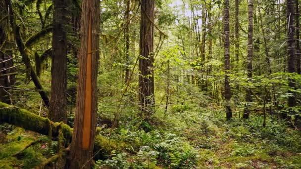 Mann geht Wandern Wälder Oregano Kaskade Bergwald