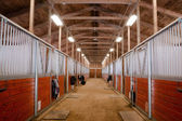 Fotografie Horse Barn Animal Sport Paddock Equestrian Ranch Racing Stable