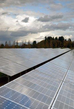Clean Green Energy Farm Solar Power Panels