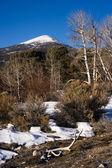 Plešatý Great Basin národního parku Nevada Spojené státy