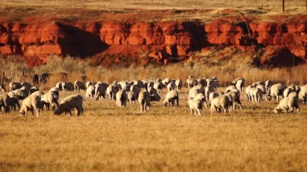 Krásný Butte dobytka ranče Thermopolis Wyoming západní Usa