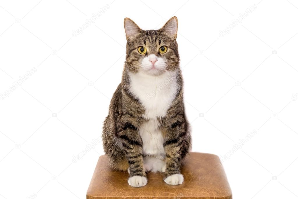 Tiragraffi per gatti cucce per cani tavoli da toelettatura
