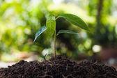 Mladá rostlina rostoucí na hnědé půdě s zeleným bokeh