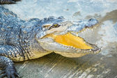 Photo Crocodile farm