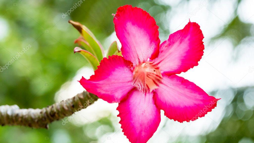 Цветы первоцветы фото с названиями что