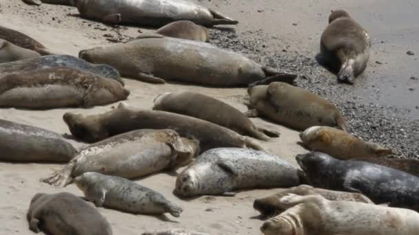Sea lions and seals on the beach
