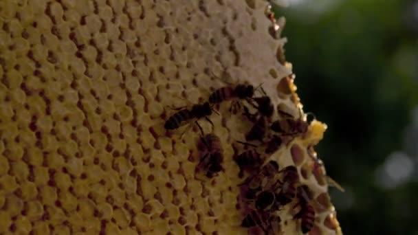 včely na cedník