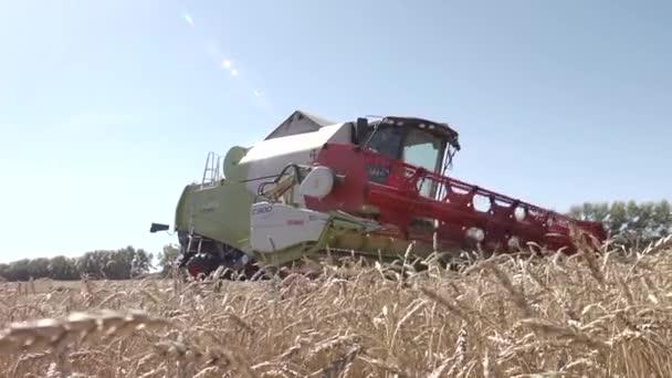 kombajn sklizeň pšenice