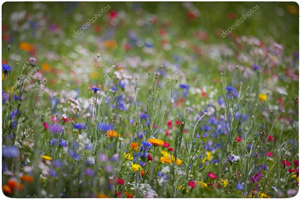 Wildflower meadow background