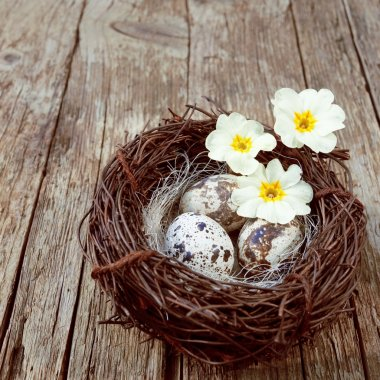 Easter egg background with bird nest