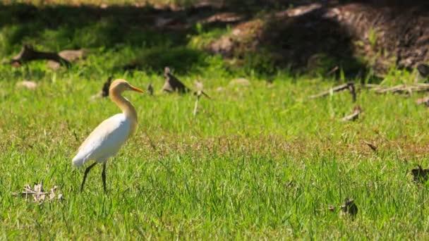 Птица с длинной шеей зеленая