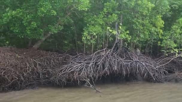 Affen laufen um Wurzeln in der Nähe des Flusses