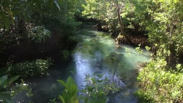 vody mezi mangrovové kořeny
