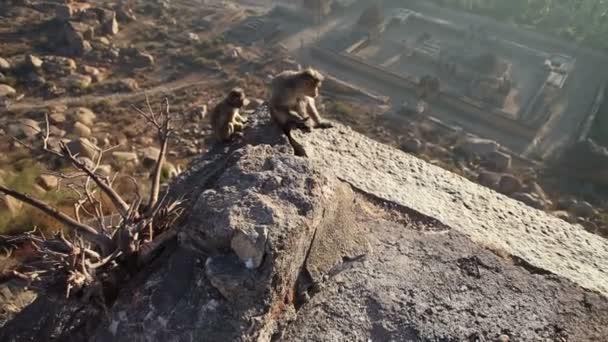 Opice na vrcholu hory