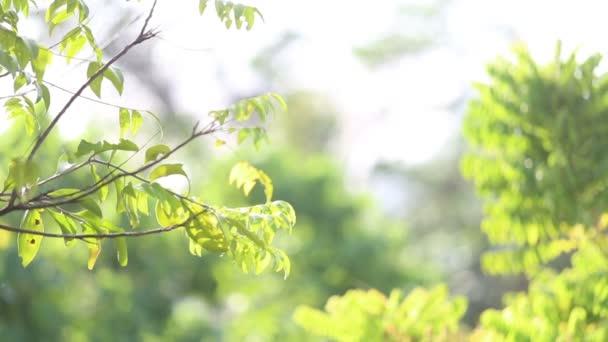 Morgenlicht im Regenwald