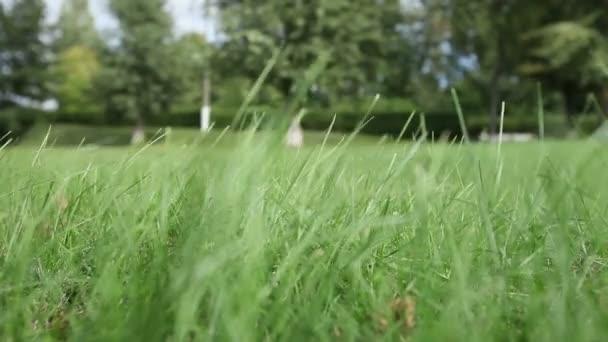 Vítr třásl zelené trávy