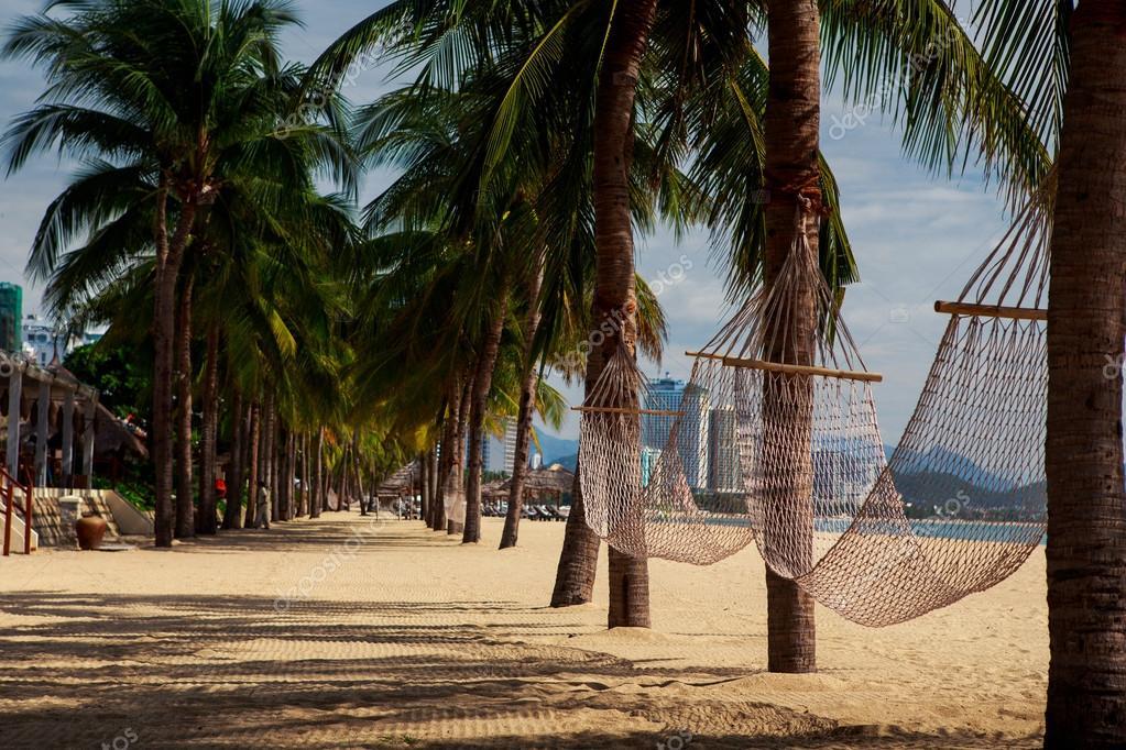 palm trees on sand beach