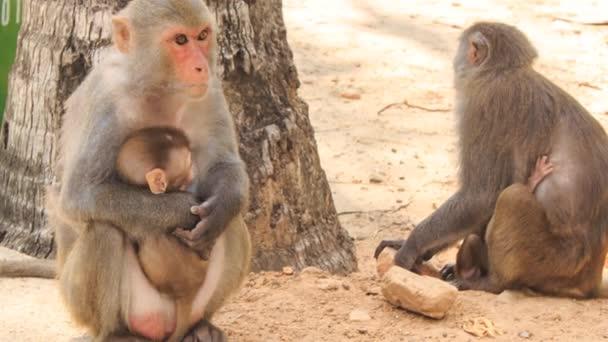 monkey mother sits near stone