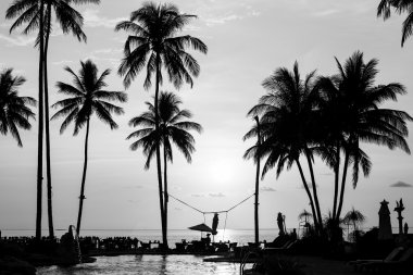 Silhouettes of palm trees on tropical beach