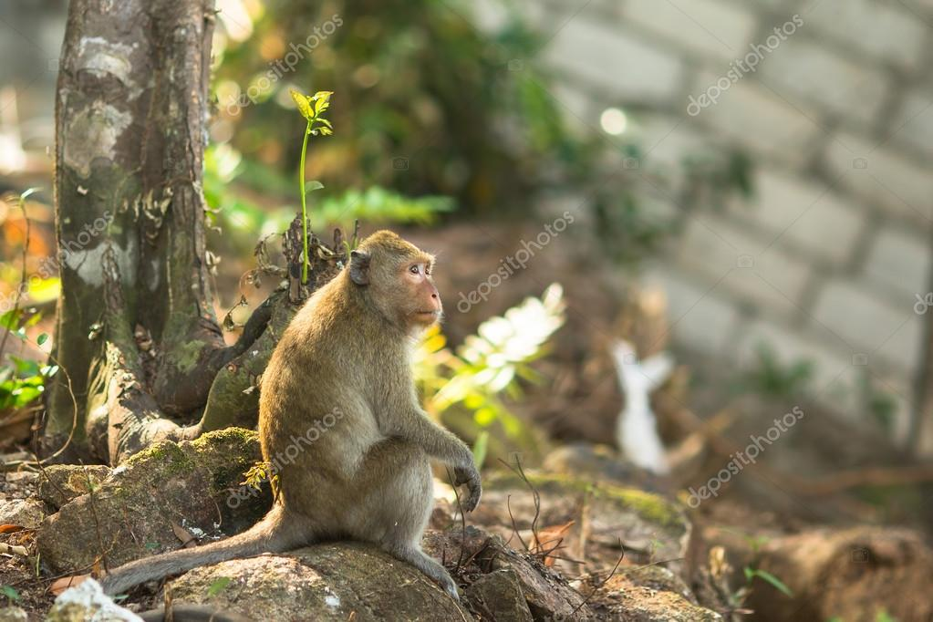 monkey sitting on roots of a tree