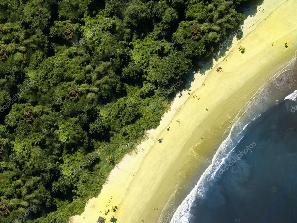 beach and forest at daytime