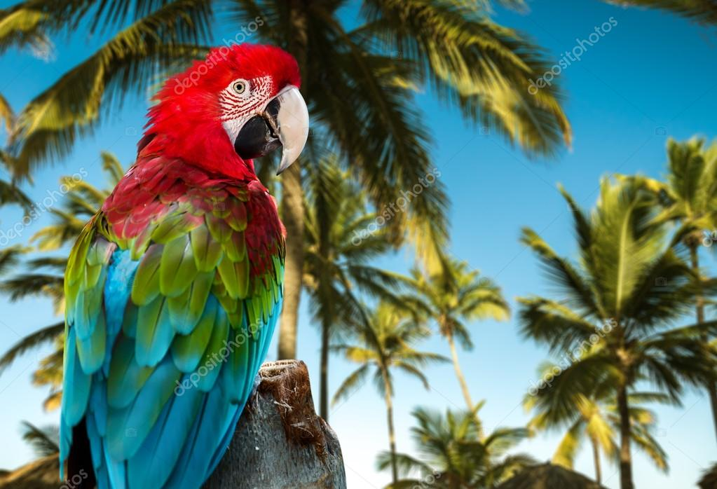 Red Macaw on the nature