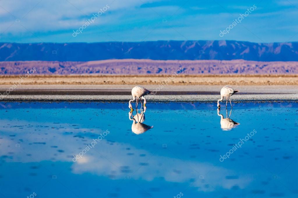 beautiful flamingos on mirror lake