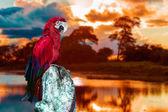 Fotografie červený papoušek