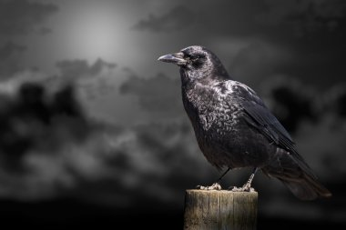 Clouds and crow