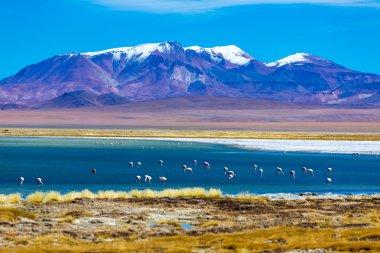 Atacama Salar with Flamingos