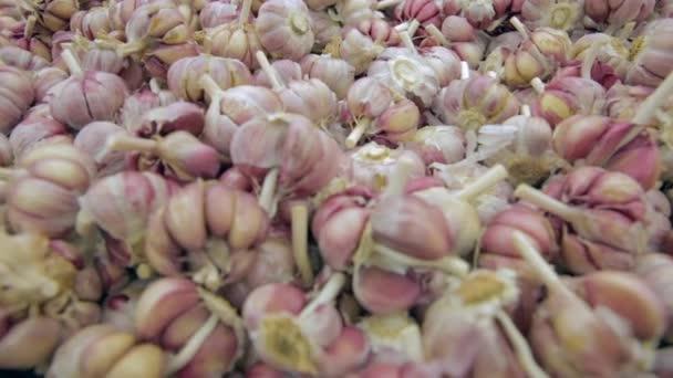 Garlics farmářského trhu