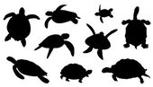 Photo turtle silhouettes