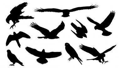 falcon silhouettes