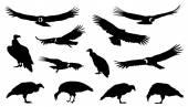 Fotografia Condor insieme delle siluette