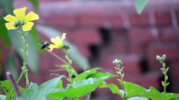 Virág a pollenek által mézelő méh