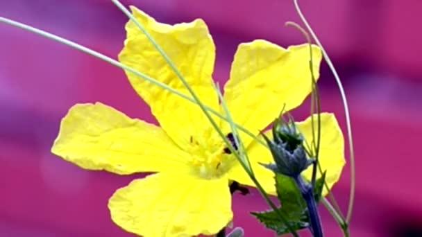 Virág pollen