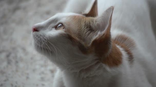 Portré felvételek macska