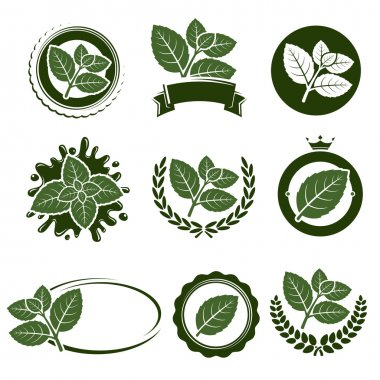 Mint leaves label set