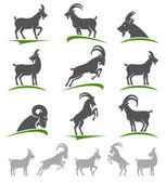 Photo Goat animal set.