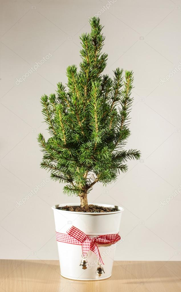 Miniature potted Christmas tree on the table