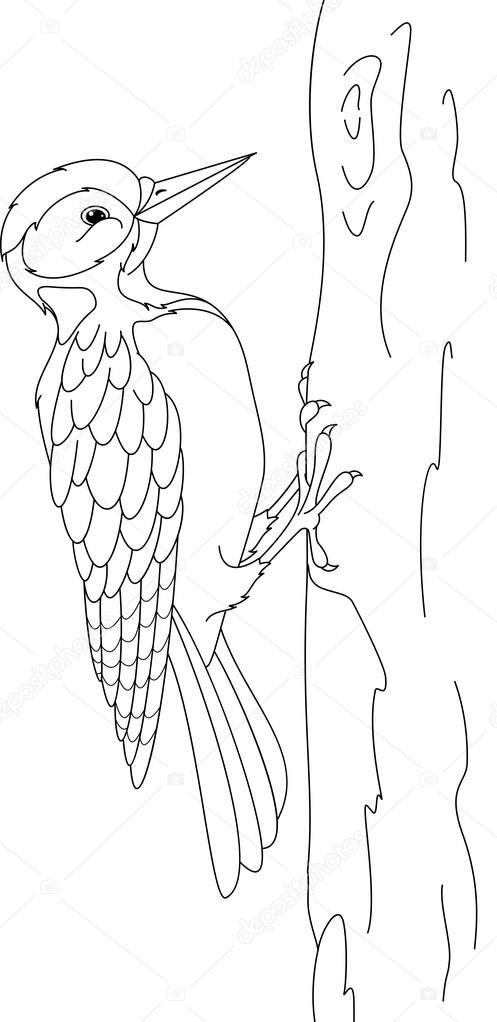 Imágenes: pajaro carpintero para colorear | Página de carpintero ...