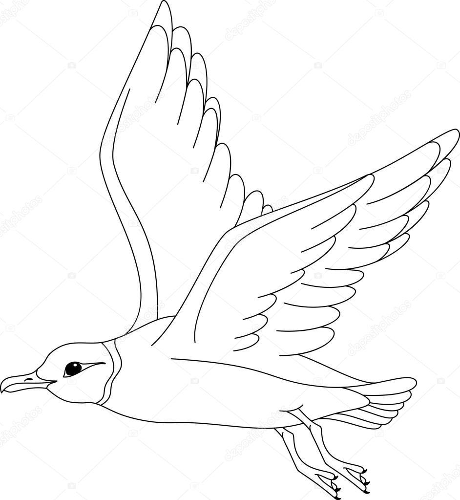 Página para colorear gaviota de Ross — Archivo Imágenes Vectoriales ...