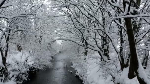Wintermorgen am Stream und Schnee fallen Bäume