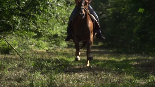 žena na koni kůň
