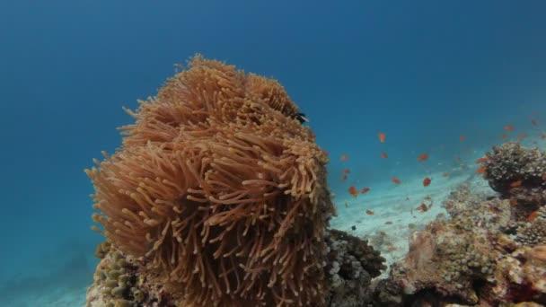 diving through shoal of fish