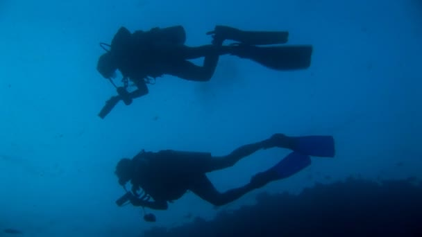 divers diving through shoal of fish