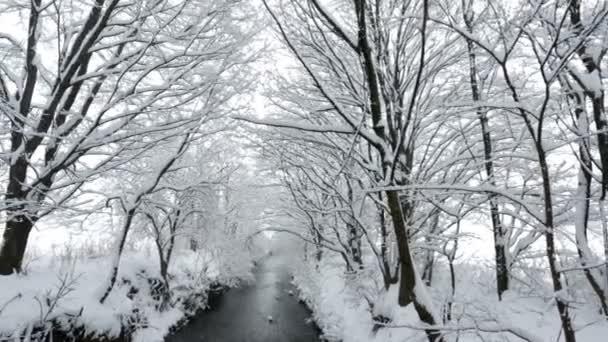 fedett fák folyó hó