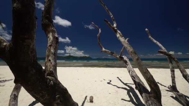 Suché dřevo na pláži