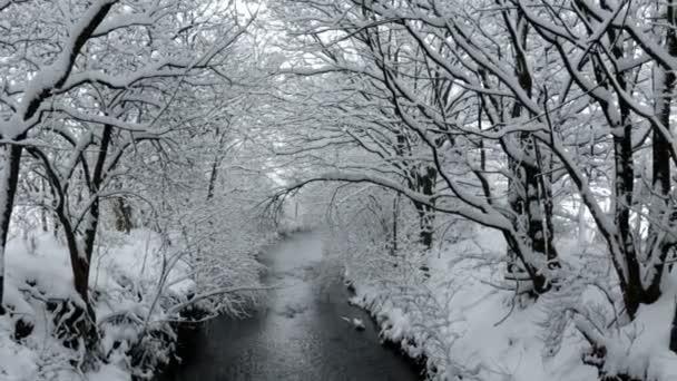 zasněžené stromy visí nad malé řeky