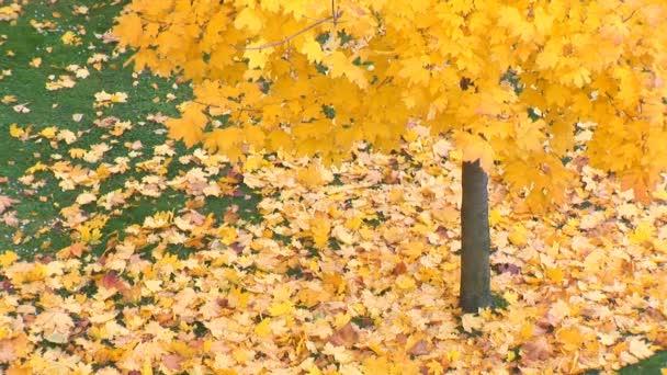 poklesla podzimní listí